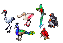 Les six oiseaux exotiques collectors